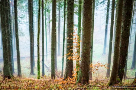 Mysterious mist in autumn forest