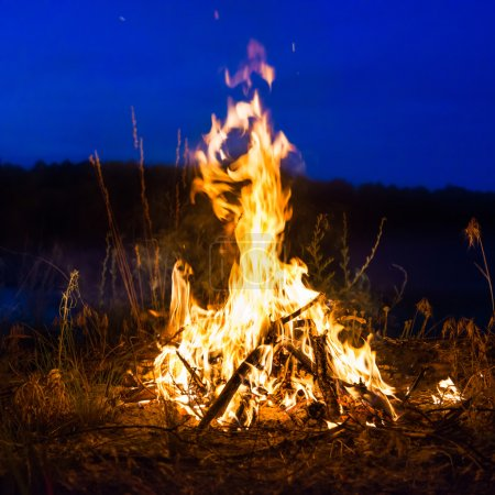 Photo for Big campfire at night in the forest under dark blue night sky with many stars - Royalty Free Image