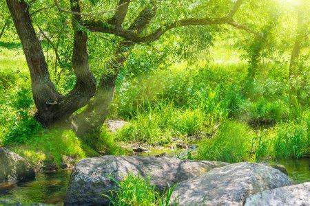 Photo pour Ruisseau dans la forêt tropicale. paysage ensoleillé environnement - image libre de droit