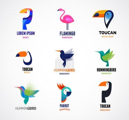 Illustration pour Oiseaux tropicaux - toucan, flamant rose, perroquet et colibri - image libre de droit