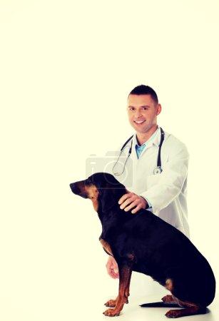 Veterinario masculino confiable perro examinador