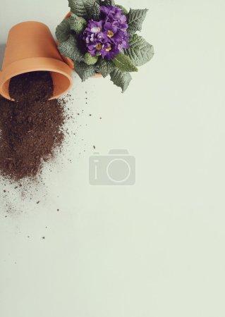gardening tools on floor