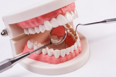 Model of white teeth and mouth mirror