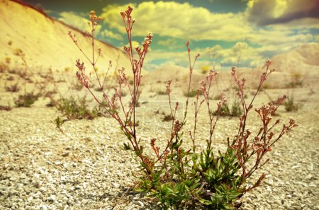 Grass on Dry soil background.