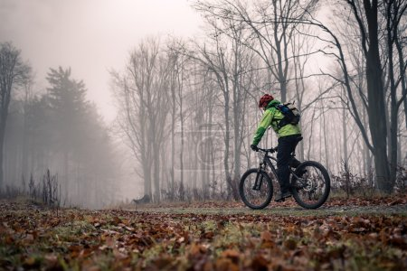 Mountain biker on cycle trail in woods