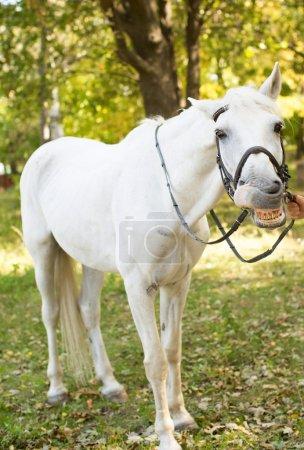 White Horse in garden