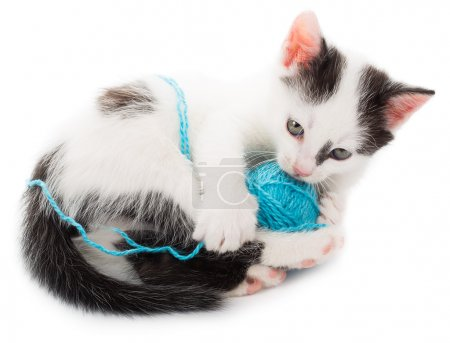 Close-up kitten playing with ball of yarn, isolate...