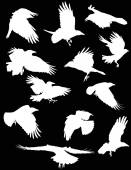 Illustration with set of twelve crows silhouettes on black background
