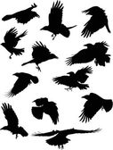 Illustration with set of twelve black crows silhouettes isolated on white background
