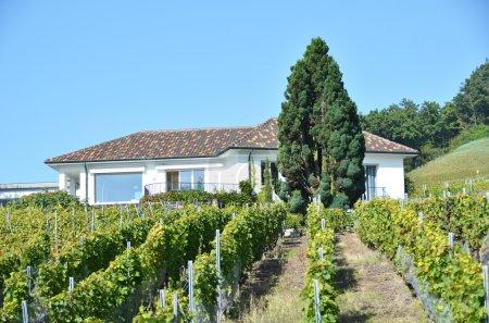 Vineyards in Lavaux region