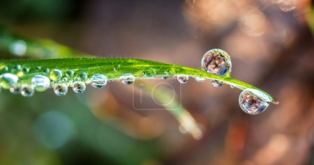 Grass with drops