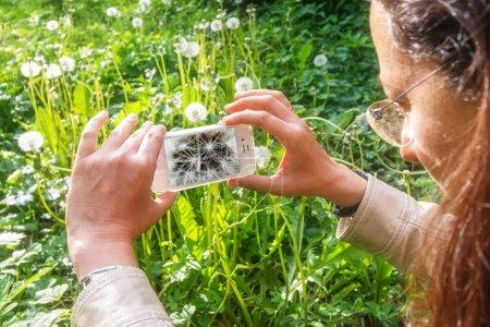 Foto de Macrofotografía en la primavera de un diente de León - Imagen libre de derechos