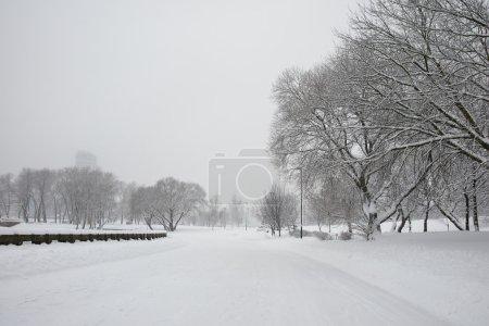 Photo pour Arbres enneigés à winter park en plein air - image libre de droit