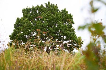 Tree on  field