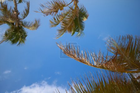 green palm trees over blue sky