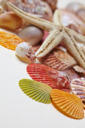 different sea shells