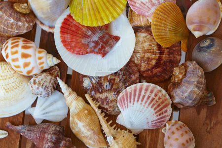 Photo for Different shells on wooden background coleup - Royalty Free Image