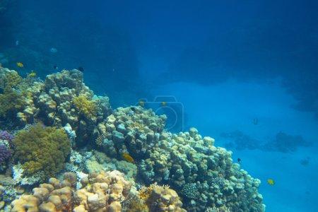 Photo pour Vue sur le magnifique récif corallien - image libre de droit