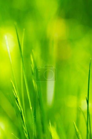 Foto de Color verde hierba como fondo natural - Imagen libre de derechos