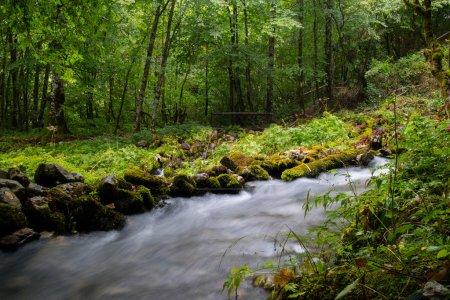 beautiful stream in motion blur