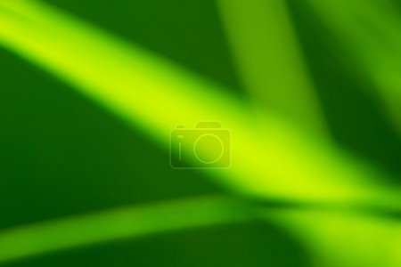 colorful green Grass