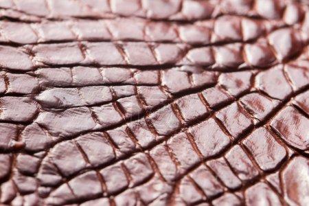 Photo pour Fond texturé en cuir à motifs alligator - image libre de droit