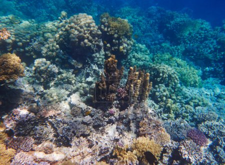 Photo pour Récif corallien tropical sous-marin comme fond - image libre de droit