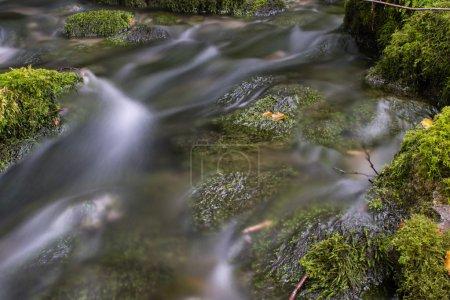 Photo pour Cours d'eau de montagne dans la forêt - image libre de droit
