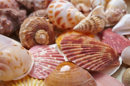 nice sea shells