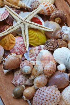 nice different shells