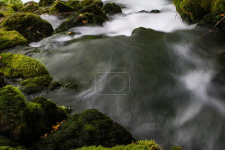 Stream with waterfall in forest