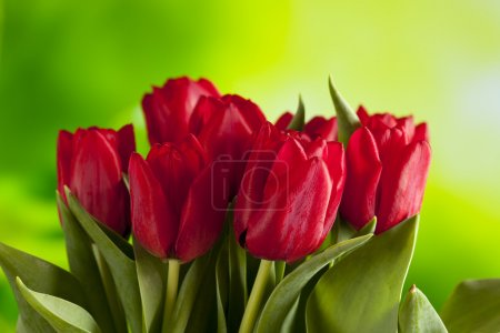 Bunch of red tulips on nature background