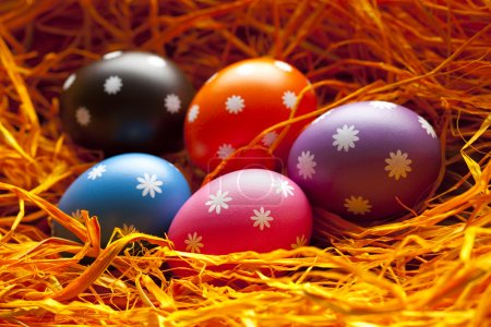 Photo for Colored Easter eggs in the nest - Royalty Free Image