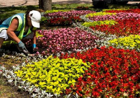 Works on laying of flowerbeds with beautiful flowe...