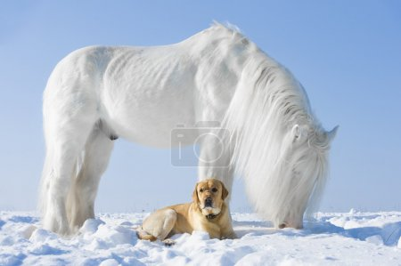 White horse and golden dog in winter