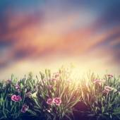 Summer meadow flowers