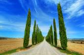 Cypress trees road in Tuscany, Italy