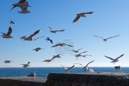 seagulls flying over sky