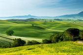 Landscape in Tuscany - Italy