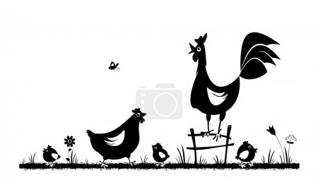 Chicken and rooster. Domestic fowl.