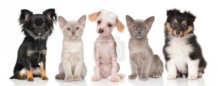 Group of puppies and kittens on white
