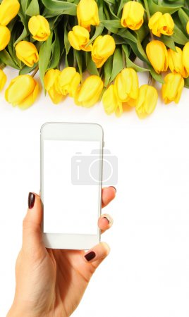Photo for Hands taking picture of yellow tulips - Royalty Free Image