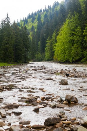 Photo for Beautiful view of summer landscape with river and forest - Royalty Free Image
