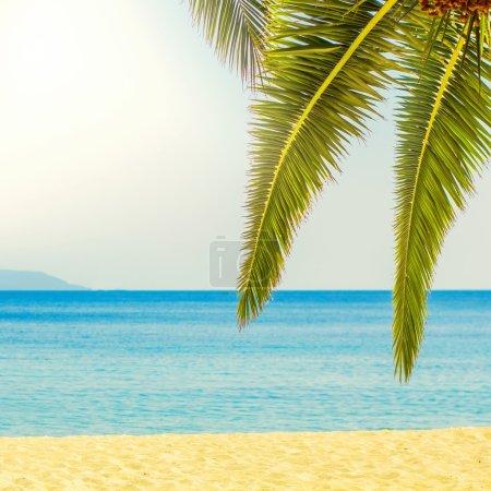 Tropical Beach Summer Travel Destination