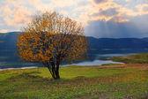 autumn tree over the sunset