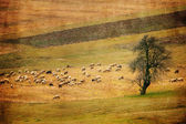 vintage sheep and meadows panoramic landscape