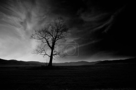 """Photo for Abstract black and white high contrasted """"low key"""" horror landscape with alone spooky tree - Royalty Free Image"""