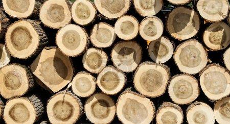 Lumbers 01