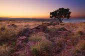 Magical sunset in Africa with a lone tree on hill and no clouds