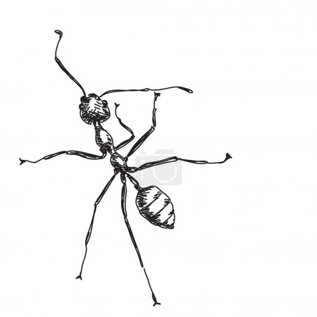 Sketch of ant